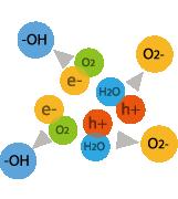 陰イオン(O2-)とヒドロキシラジカル(-OH)が生成